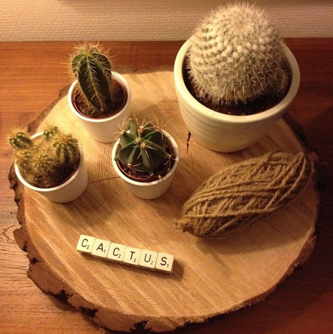 Mijn cactussen boomstam plak sfeer in huis pinterest for Boomstamschijven decoratie