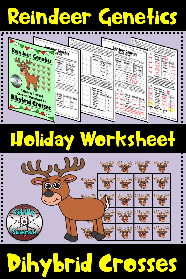 Christmas Dihybrid Cross Worksheet -Reindeer Genetics ...