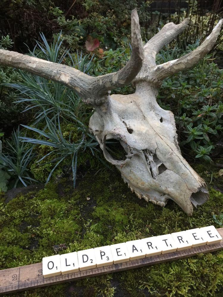 10+ Animal bones for sale ideas