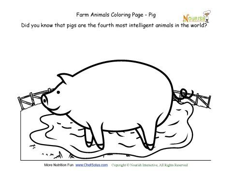 Farm Animals Coloring And Fun Fact Page Learn About The Pig Farm Animal Coloring Pages Farm Animals Fun Facts