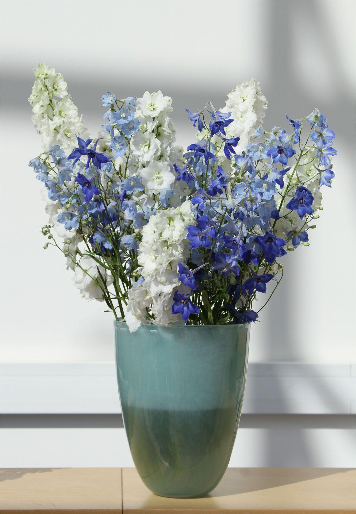 Ritters weiße und blaue Blumen white and blue flowers