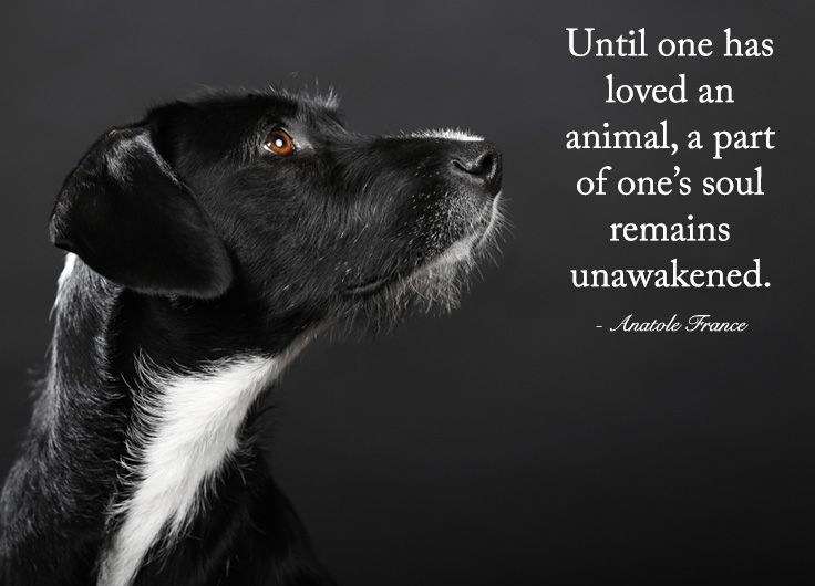 Until one has loved an animal  a part of one s soul remains     Until one has loved an animal  a part of one s soul remains unawakened     Anatole France