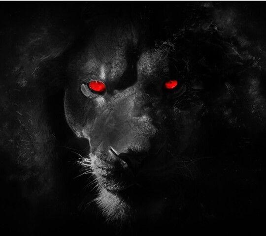 Dark Devious Lion Black Lion Lion Wallpaper White Lion Images
