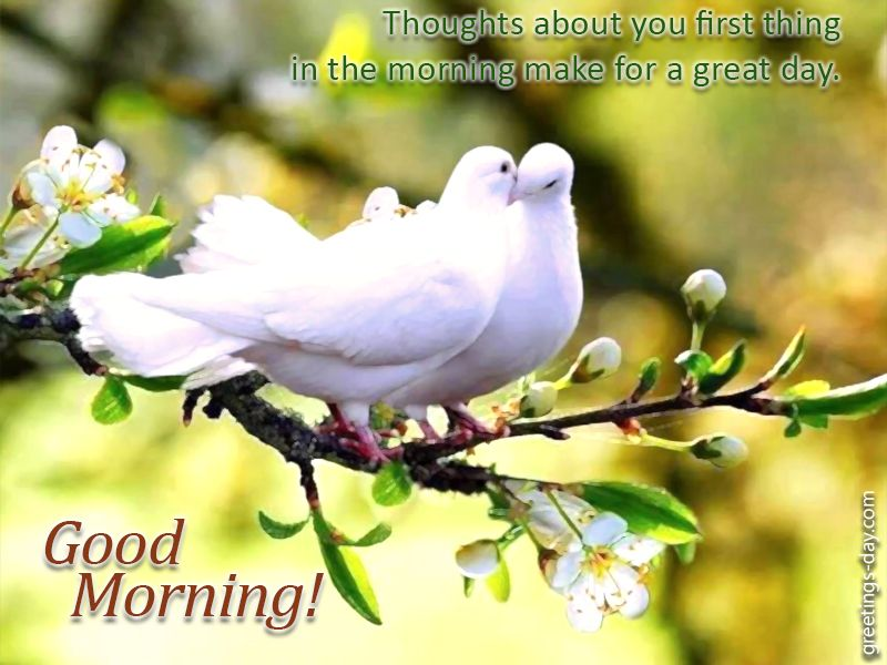 Image result for naughty morning greetings morning messages image result for naughty morning greetings m4hsunfo