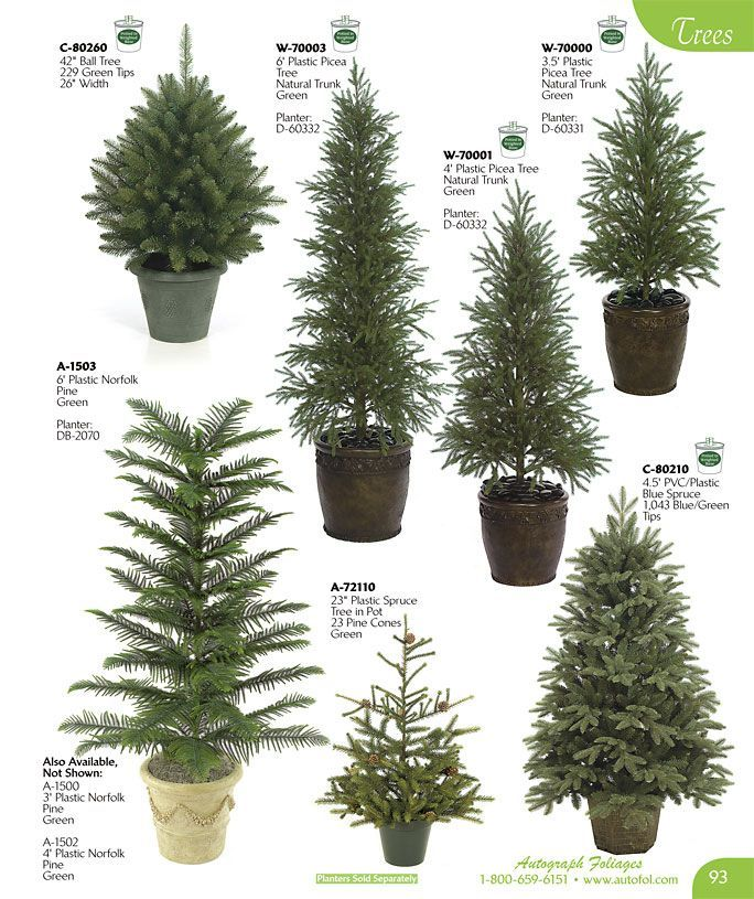 Evergreen Landscape Trees