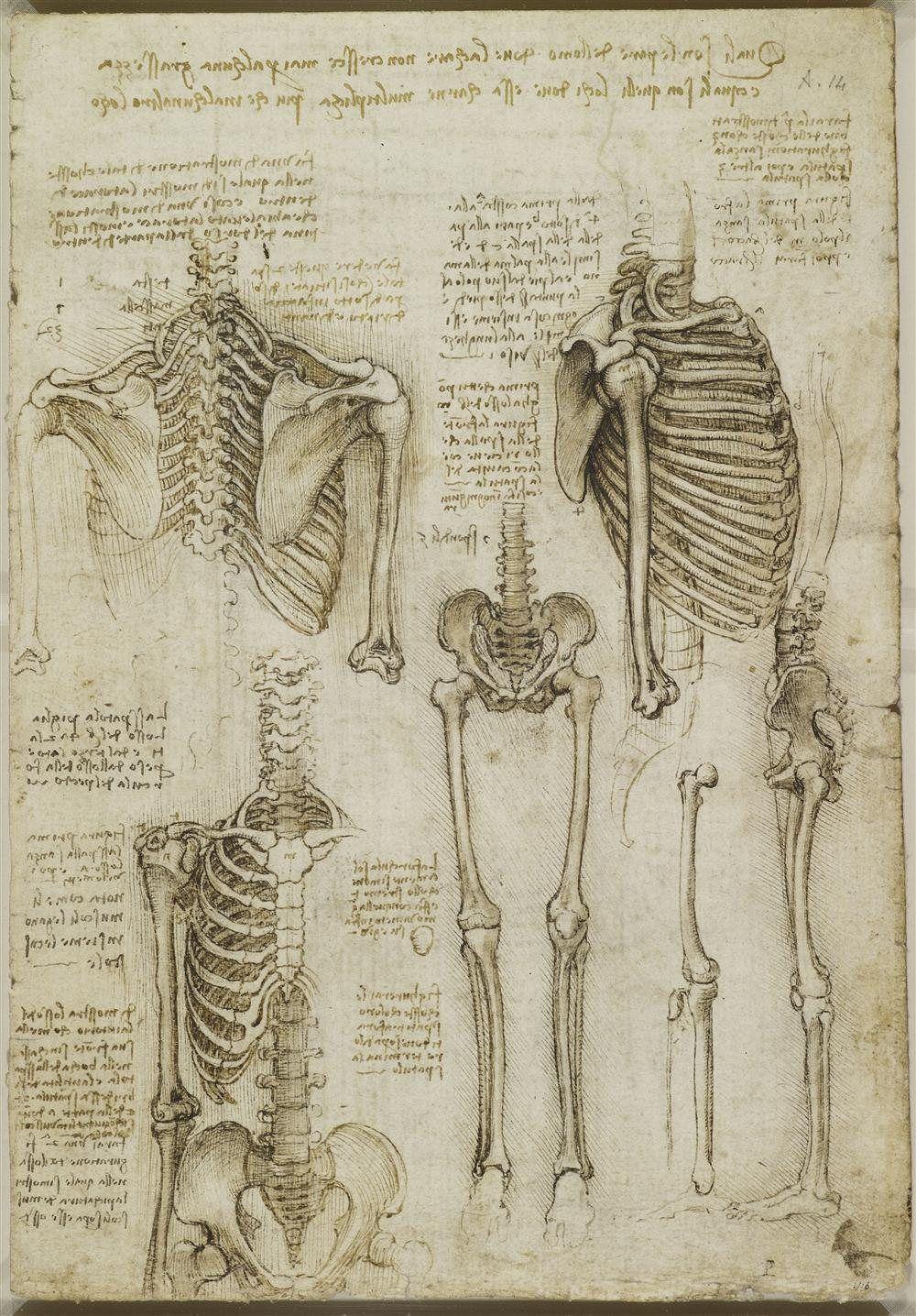 Dos Muestras Rescatan Los Dibujos De Leonardo Da Vinci Produccion Artistica Como Dibujar Cosas Arte De Anatomia Humana