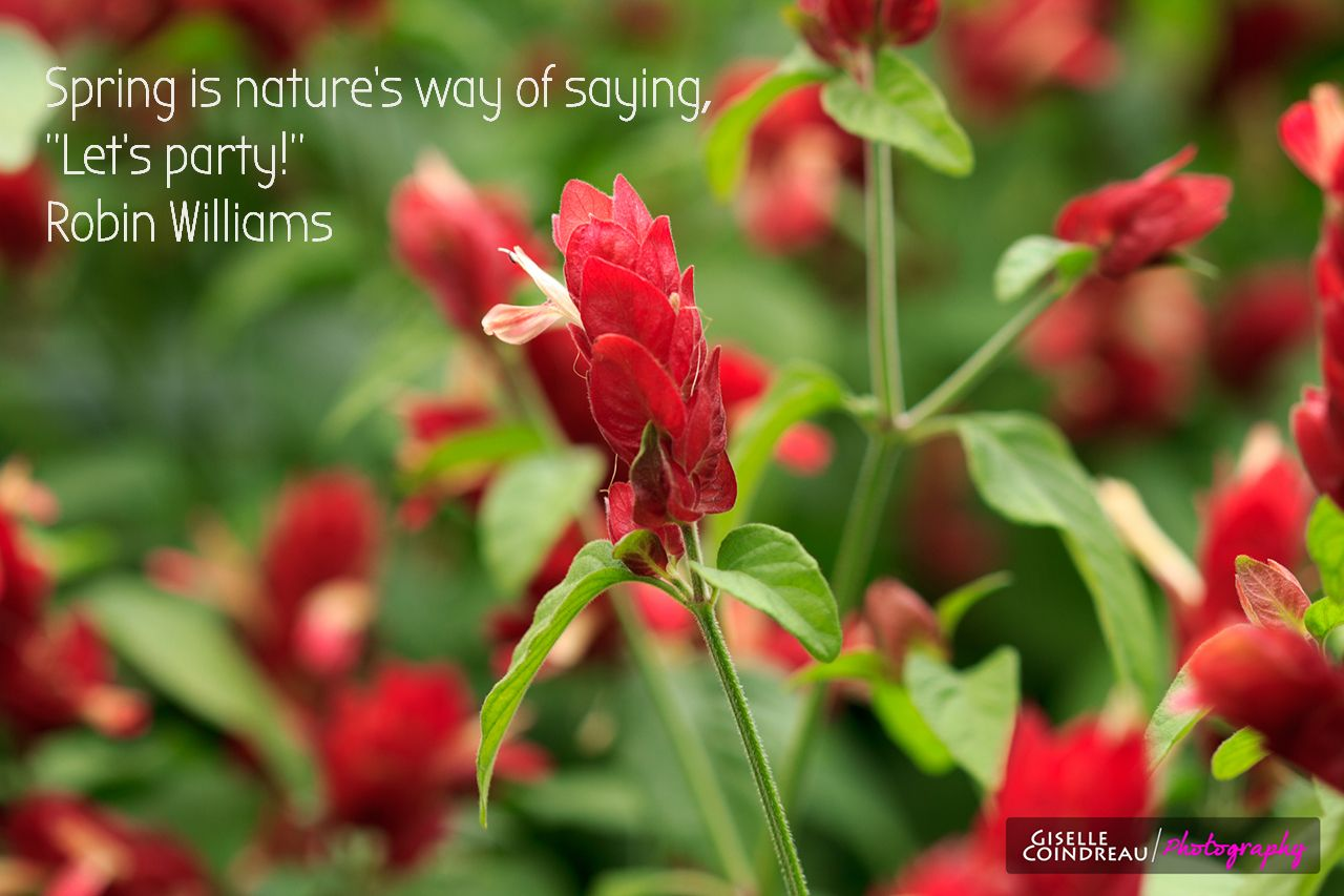 Spring Quotes Brilliant Quote About Spring  Spring Quotes  Pinterest  Spring Spring .