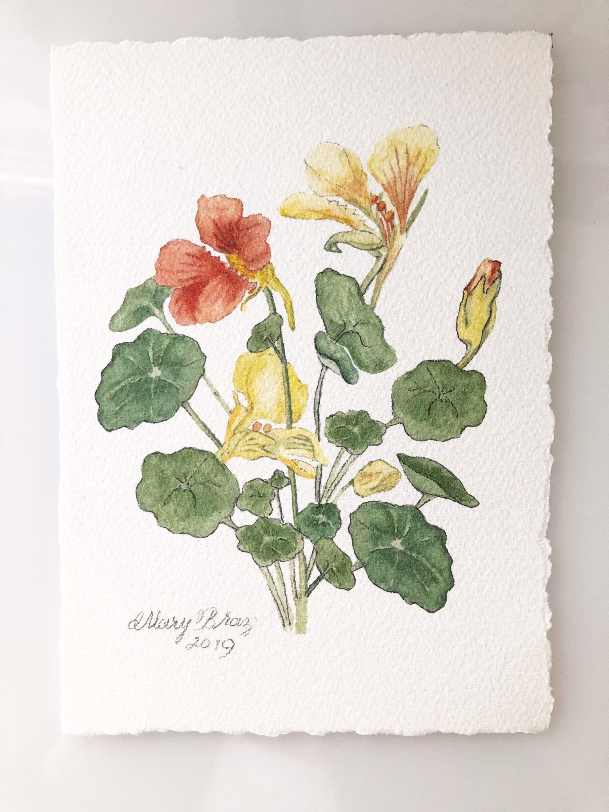Nasturtium painting in watercolor peach and yellow etsy
