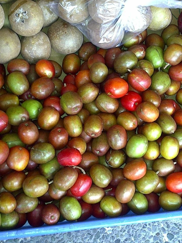 Hog Plum or Coolie Plum and Nasberry yummy Jamaican Fruits Party