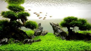 Aquascaping For Beginners: 11 Beautiful Aquatic Plants ...