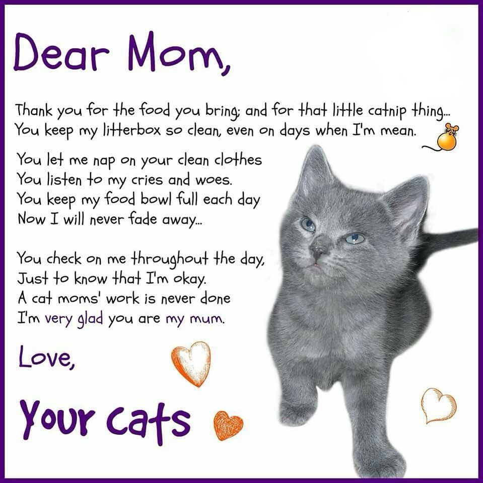 Made With For Cats On Instagram Happy Mother S Day Cat Parents In 2020 Cat Poems Crazy Cats Cats