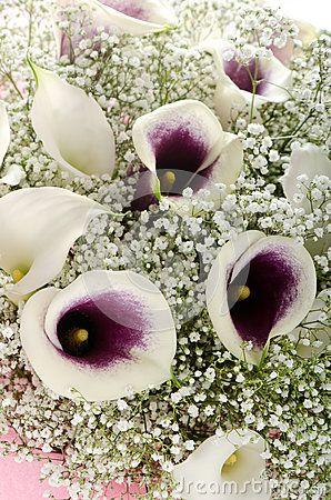 Flowers: bouquet of callas and gypsophila by Morskaja, via Dreamstime