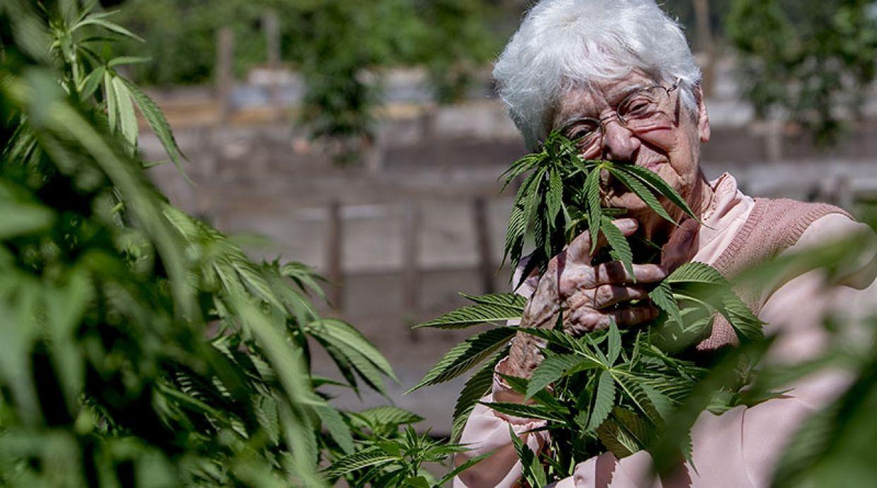Abuela de 91 años da clases de alta cocina italiana con marihuana (VIDEO) - http://growlandia.com/marihuana/abuela-de-91-anos-da-clases-de-alta-cocina-italiana-con-marihuana-video/