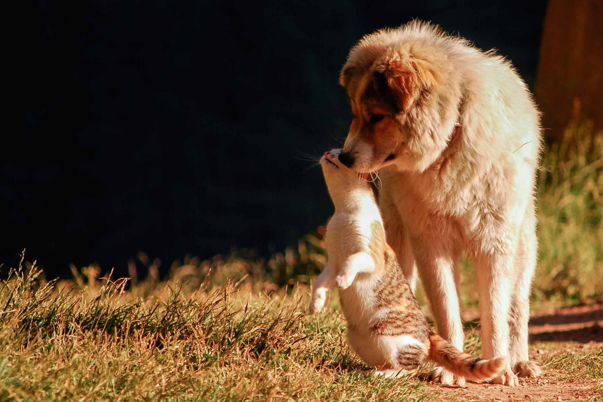How To Train Your Dog To Not Kill Cats Cat Having Kittens