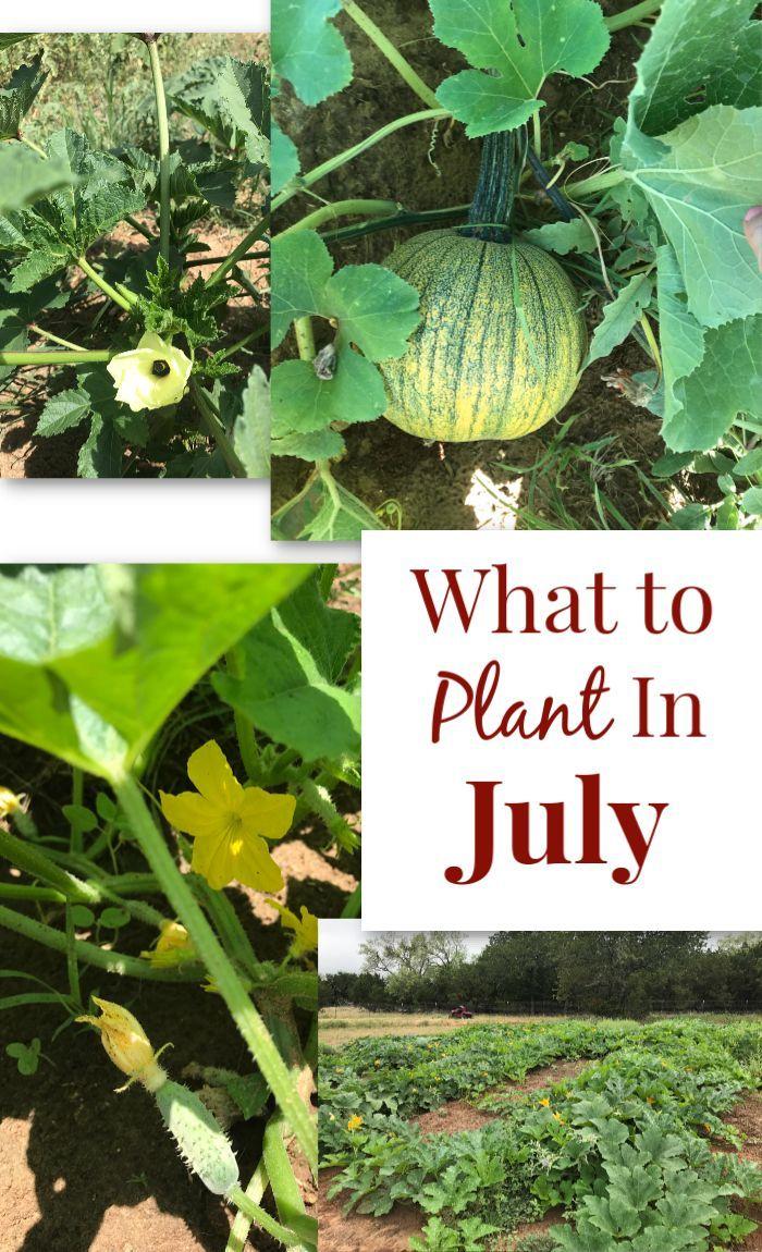 Summer Vegetable Garden What To Grow In July Garden 400 x 300