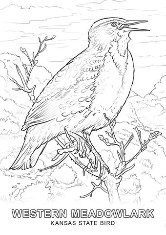 Kansas State Bird Coloring Page From Kansas Category Select From