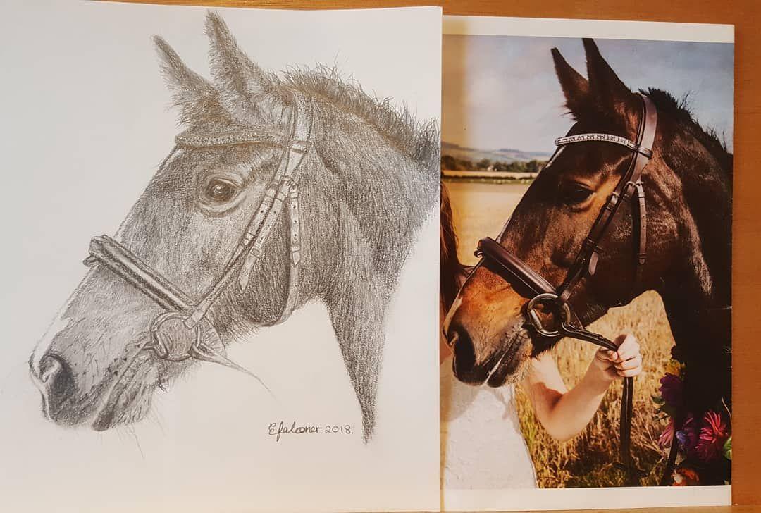 A4 graphite sketch Animals, Pet portraits, Horse portrait