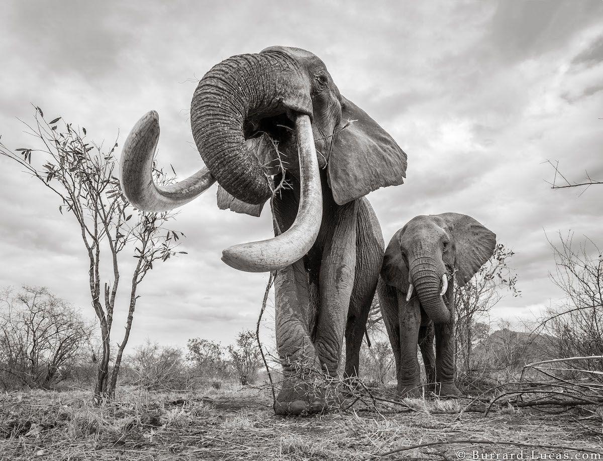 "Wildlife Photographer Captures the Last Photos of the ""Queen of ..."