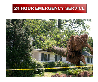 Tree Service Frederick Md With Images Tree Service Tree