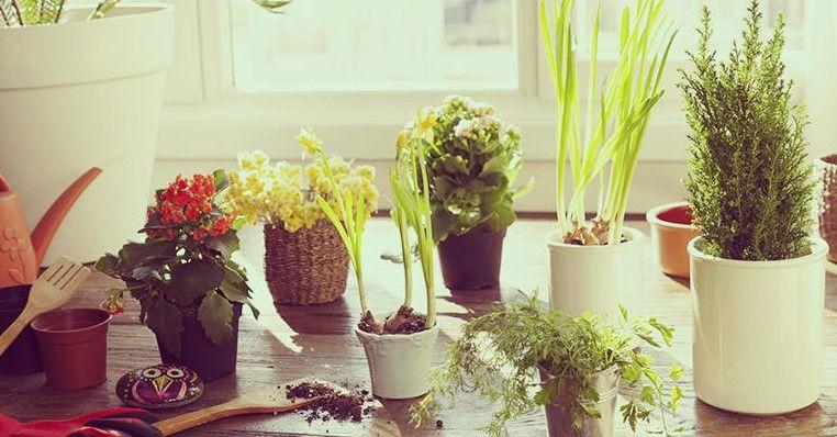 diy potting soil for indoor plants