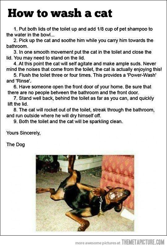 How To Wash A Cat Bones Funny Funny Cats Funny