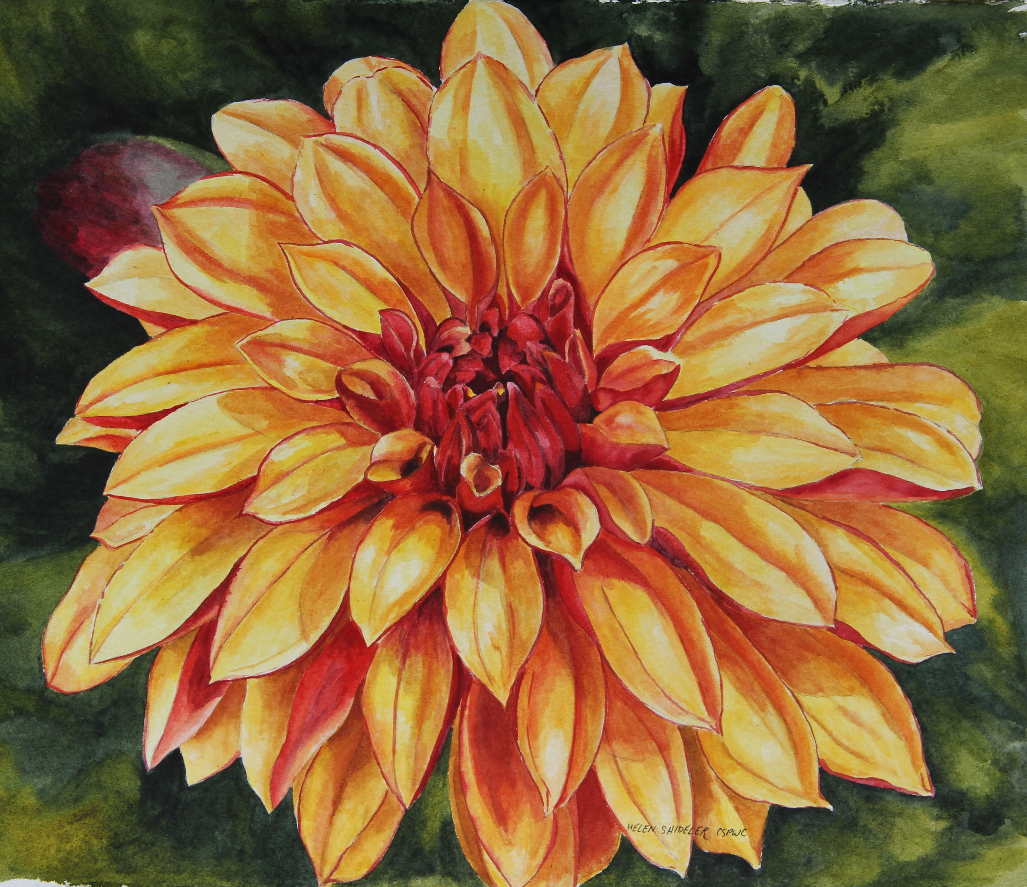 dahlia flower painting - Google Search