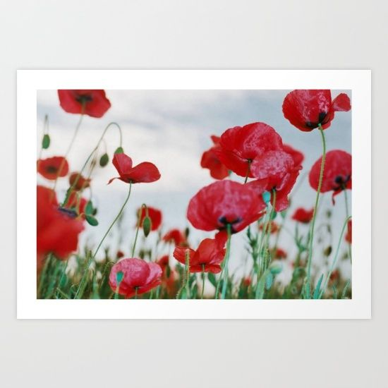 The flower symbolism associated with poppies is beautymagic the flower symbolism associated with poppies is beautymagic mightylinksfo