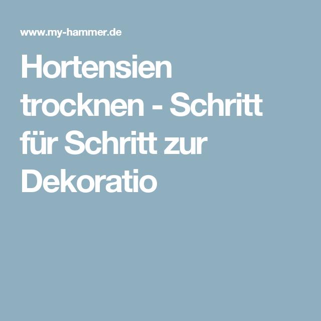 Hortensien Trocknen hortensien trocknen schritt für schritt zur dekoration