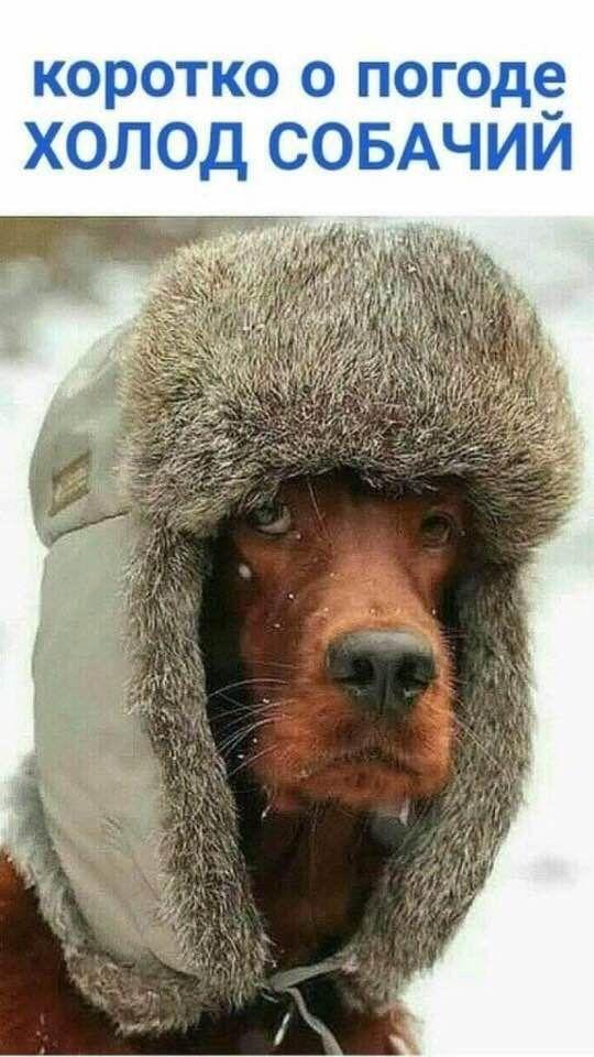 Коротко о погоде картинки приколы мороз всех женщин