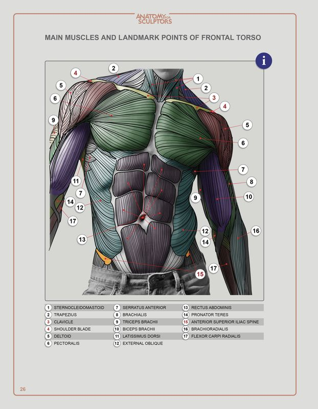 Anatomy Next Store Pdf Ebook Download For Artists Anatomy