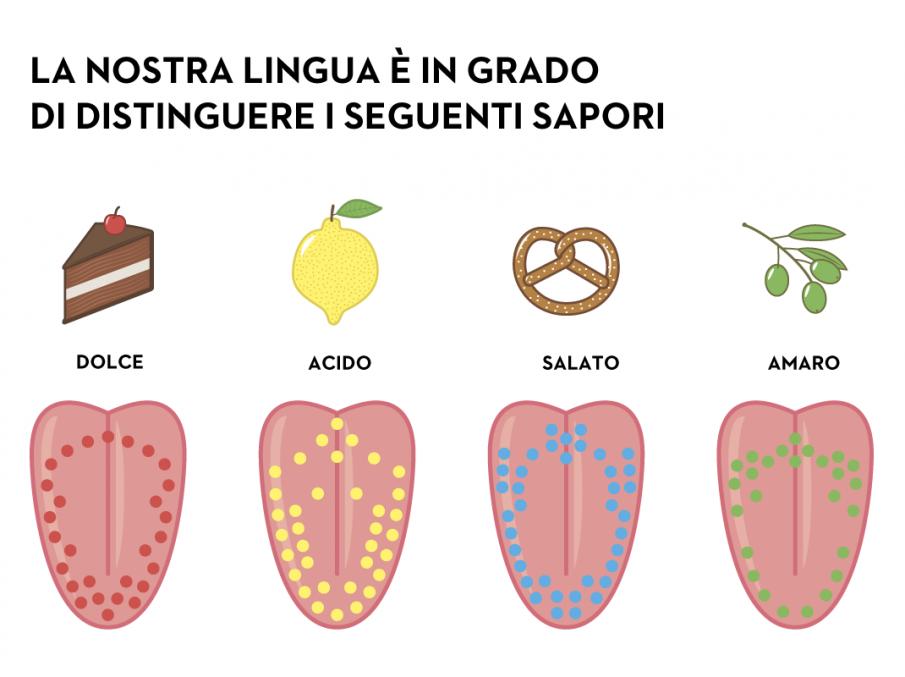 Populaire IL GUSTO 5 SENSI - Cerca con Google | materiale scolastico  OL99