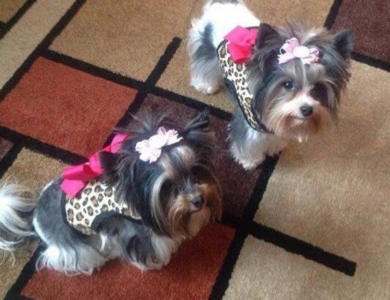 Cotton Leopard Small Dog Harness With Bow Made In Usa Dog
