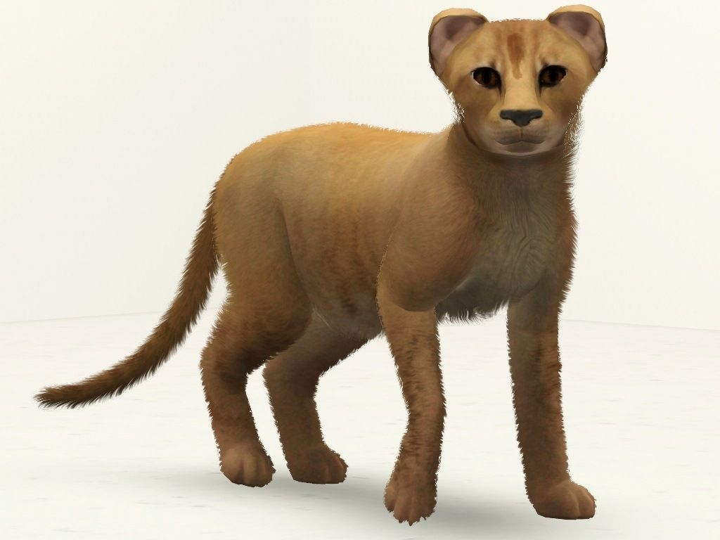 206 best images about sims 3 on pinterest dots sims 4 and warm - Mod The Sims Lion Cub