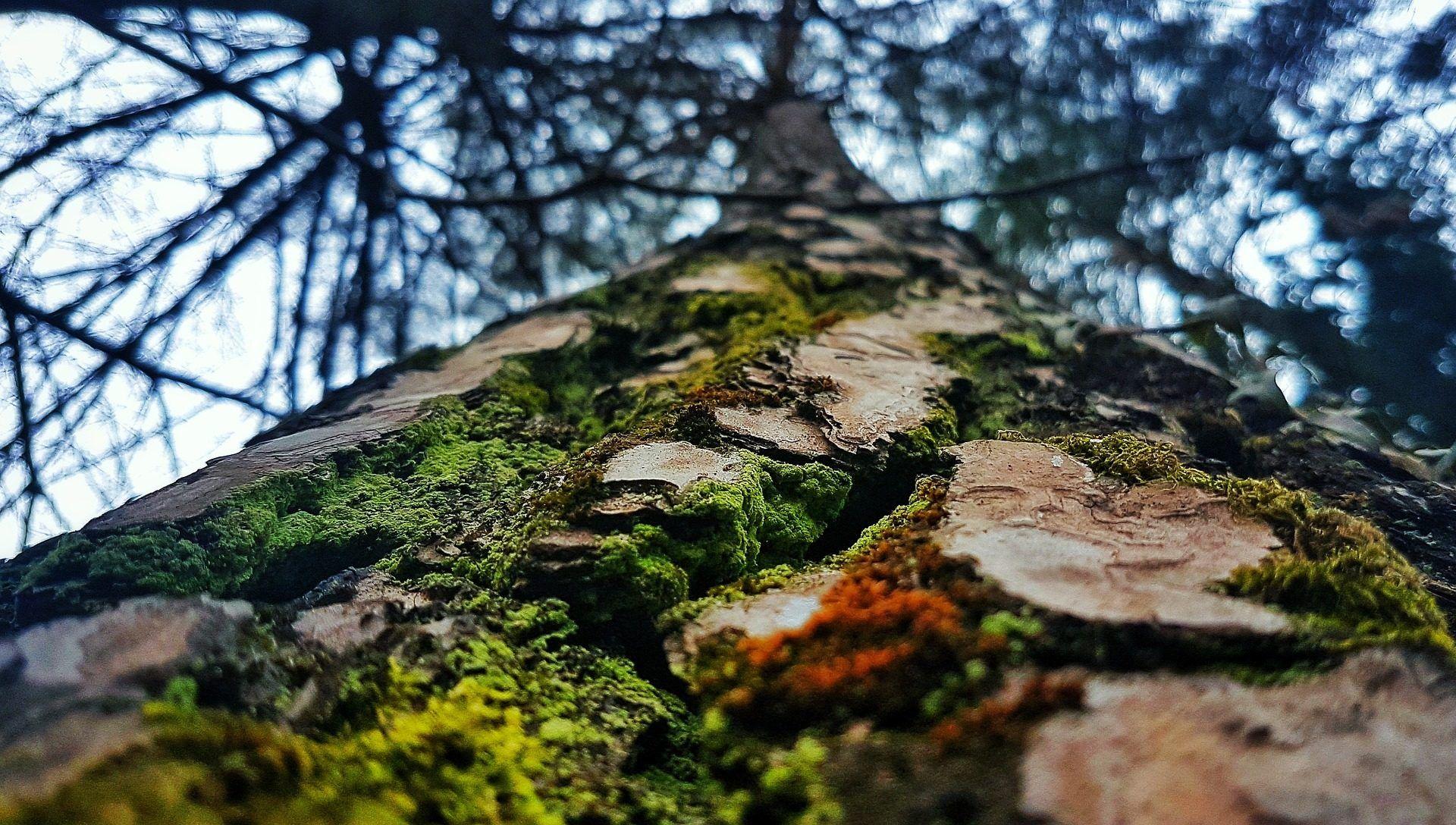 tronco, árbol, corcho, moho, liquen, ramas, musgo, 1704151037