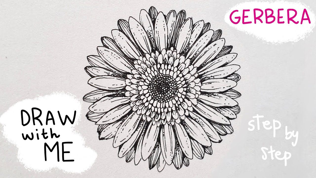 Today S Flower Gerbera Draw With Me Using 1 Pen Youtube In 2020 Daisy Drawing Flower Drawing Easy Canvas Art