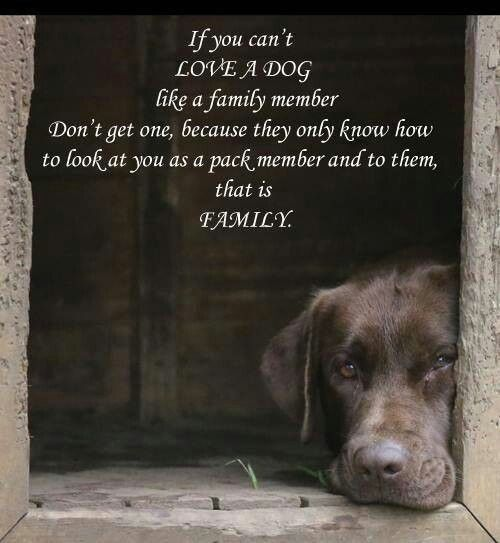 Animals are family quotes for life pinterest pets for Every dog needs a home