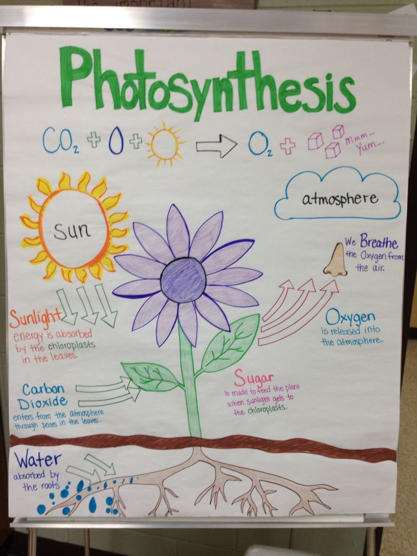 Photosynthesis anchor chart by Miss Lintz Photosynthesis