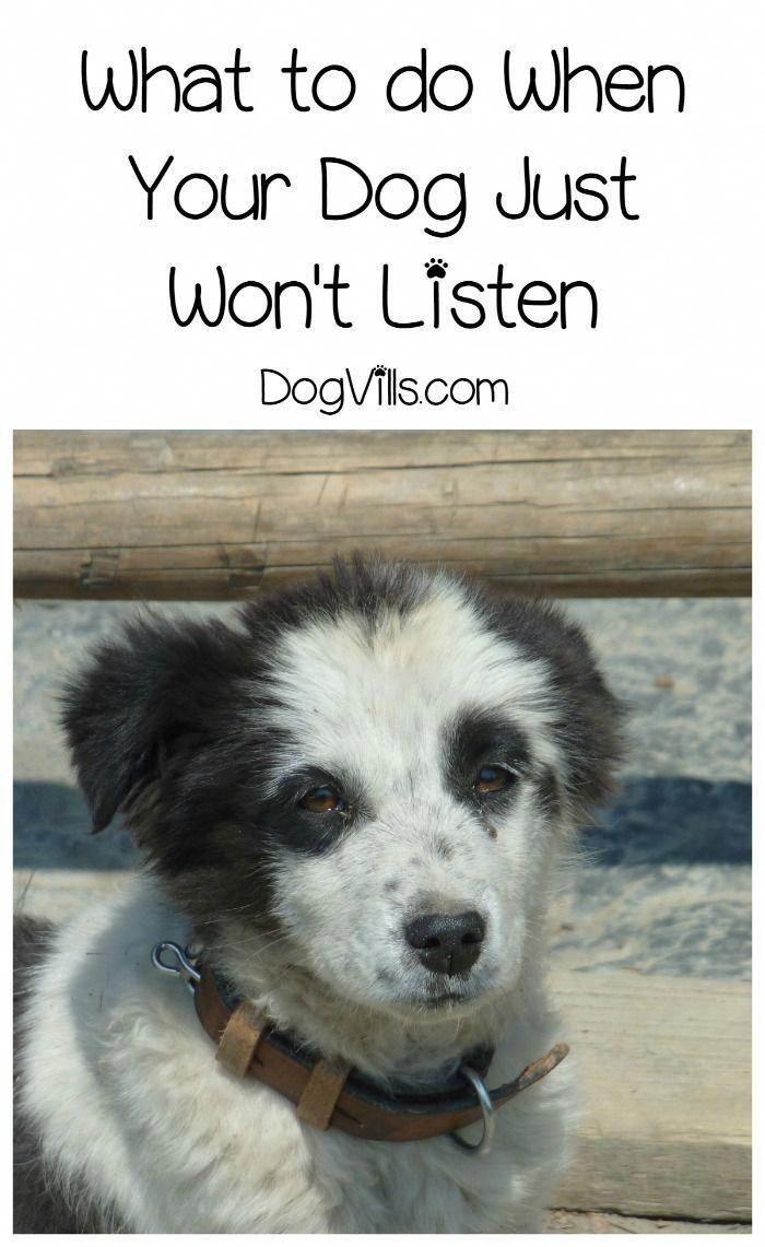 dog training help free #DogtrainingHouston puppy training
