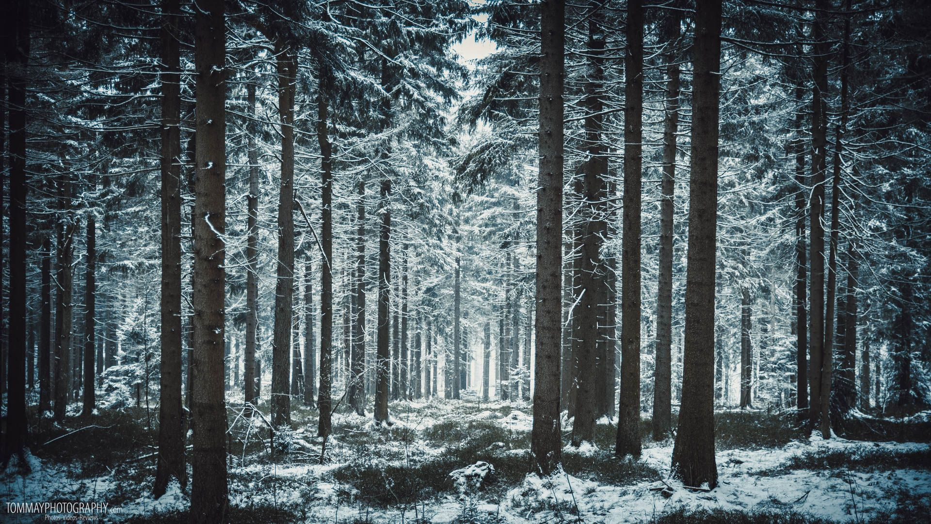 Winter forest background images pinterest
