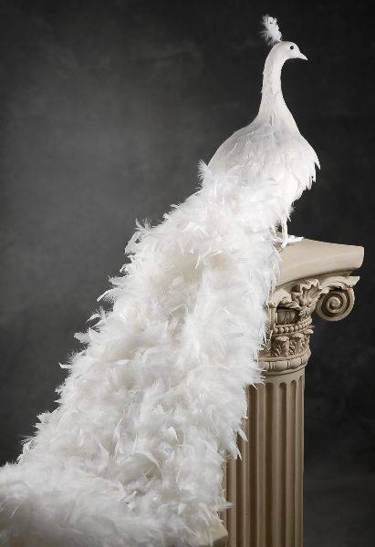 White Artificial Peacock With Curly Feathers 54in Large Christmas Decorations Peacock Christmas Peacock Wedding Decorations