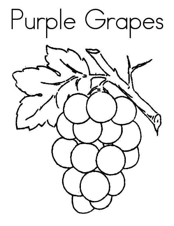 Purple Grapes Coloring Pages Color Luna Grape Drawing Fruit Coloring Pages Coloring Pages