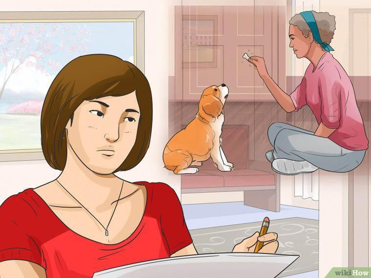 3 Ways To Train Your Dog To Use A Dog Door Wikihow Howtotraincats