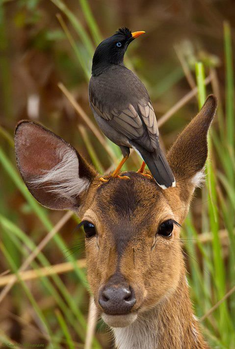 Deer and bird https://www.dogstreettees.com/ | Animals friends, Animals  wild, Animals friendship
