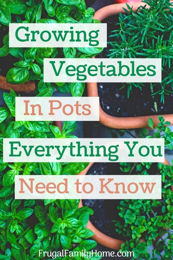 Getting Started with Container Gardening is part of Container gardening vegetables, Growing vegetables in pots, Growing vegetables, Container gardening, Container vegetables, Container herb garden - You can grow your own vegetables in pots  These tips can help you get your container garden started