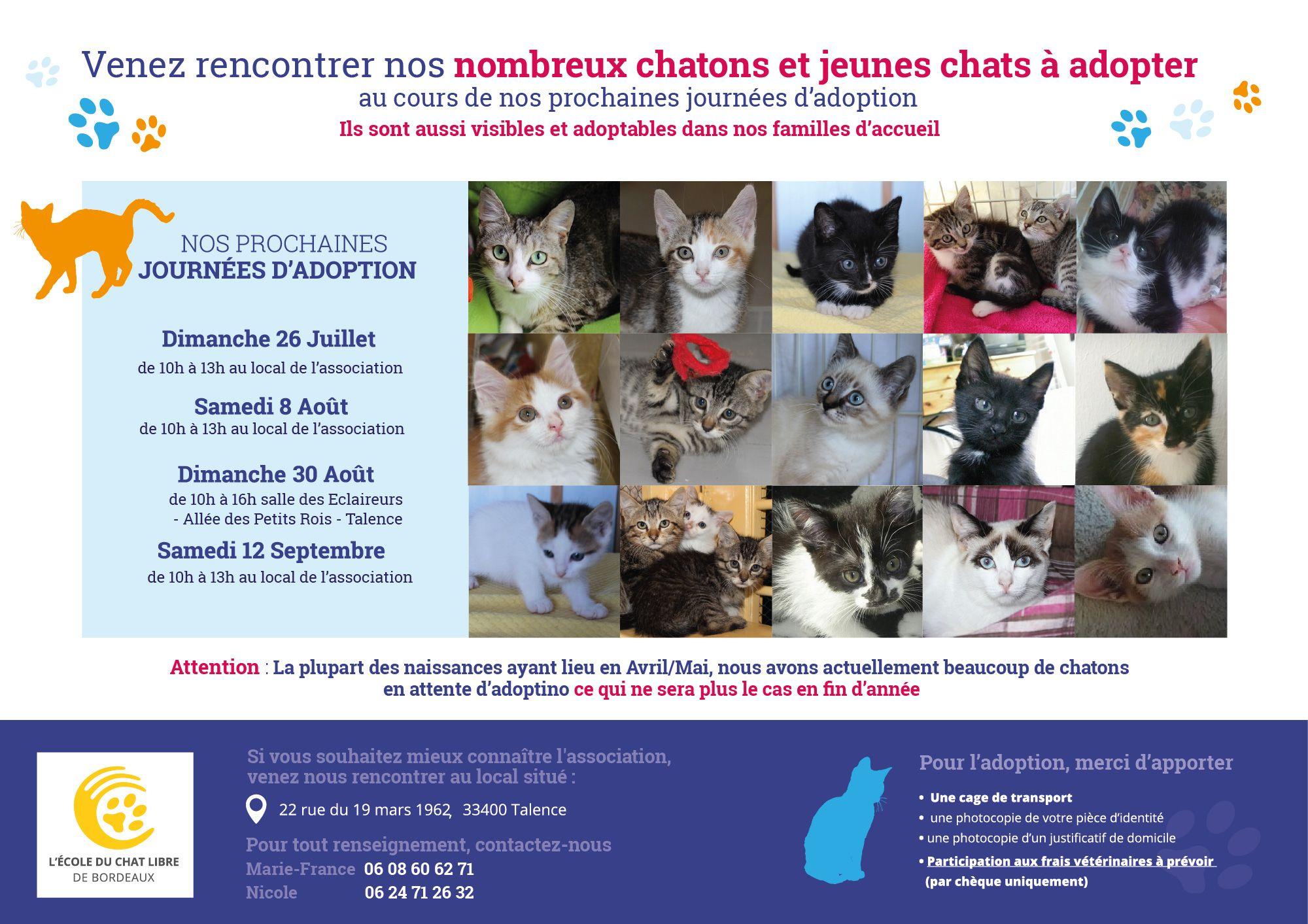 ecole du chat libre de bordeaux cliquer 2x pour les prochaines journ es d 39 adoption de chatons. Black Bedroom Furniture Sets. Home Design Ideas