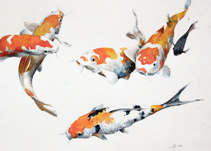 Koicarp06 koi pinterest poissons carpe et aquarelles for Poisson rouge koi