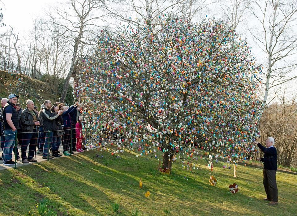 Volker Kraft decorated an apple tree in Saalfeld - Germany - with about 10 thousand Eastern eggs.