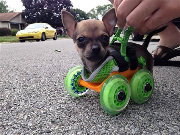 A Neighbor 3d Printed A Walker For His Crippled Little Buddy