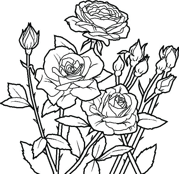 Floral Coloring Pages Flower Coloring Pages Rose Flower Coloring Pages Roses And Flowers Colori Rose Coloring Pages Flower Coloring Pages Garden Coloring Pages