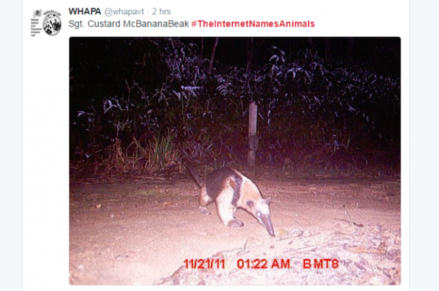The Internet Is Hilariously Renaming Animals In The Spirit